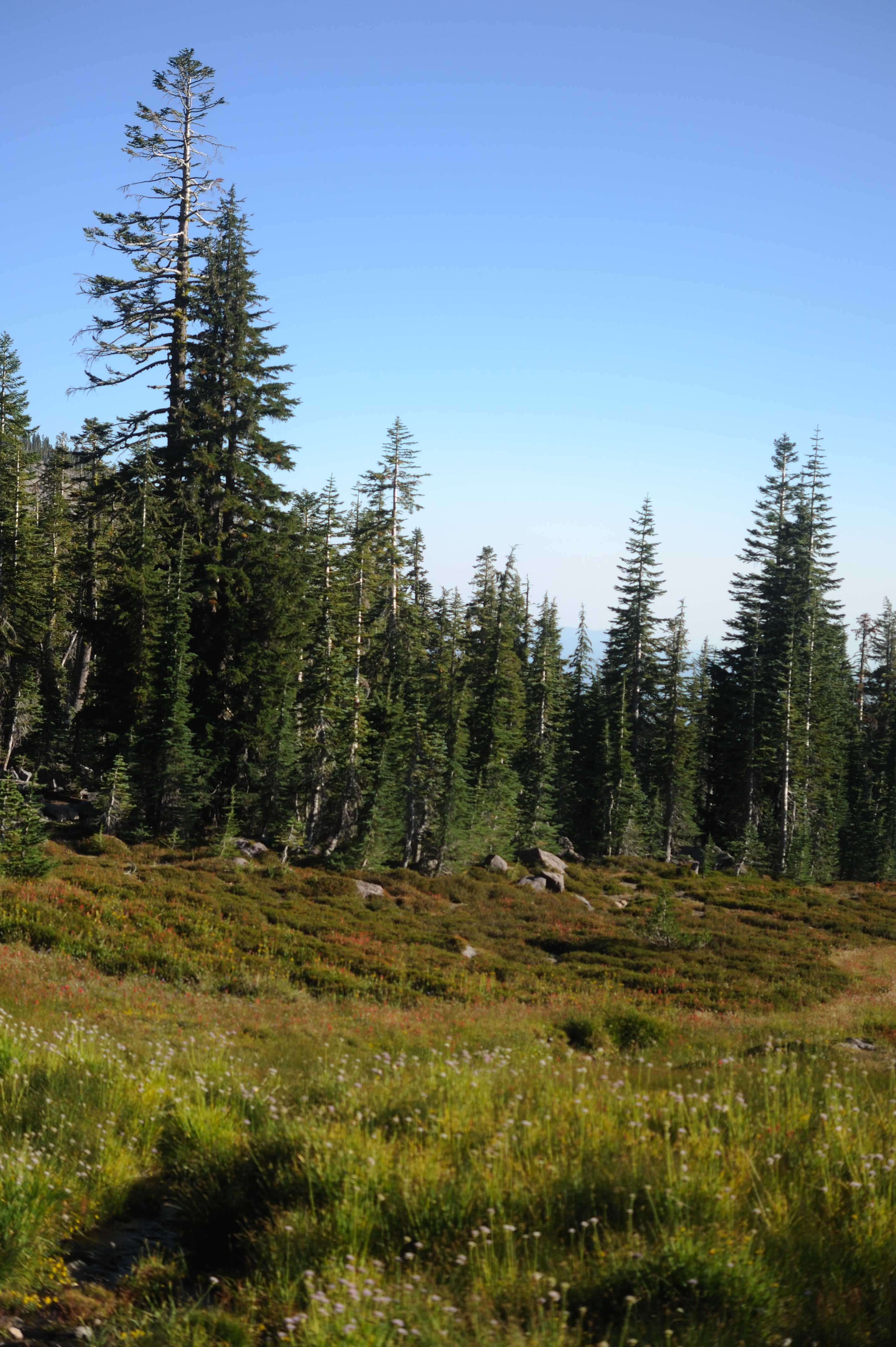 upper panther meadow